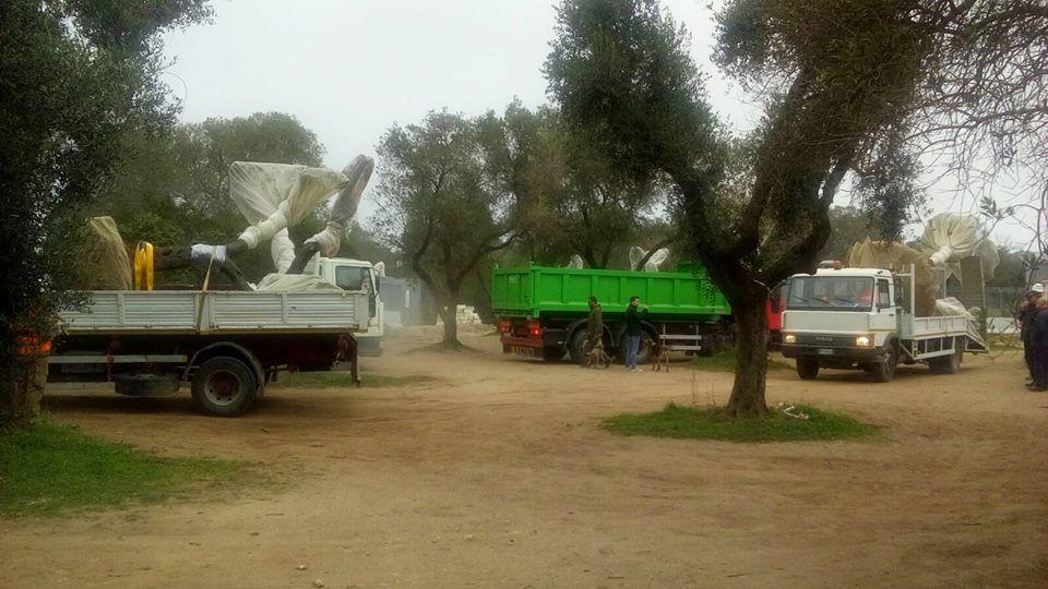 Gasdotto Salento, Tar del Lazio sospende espianto ulivi